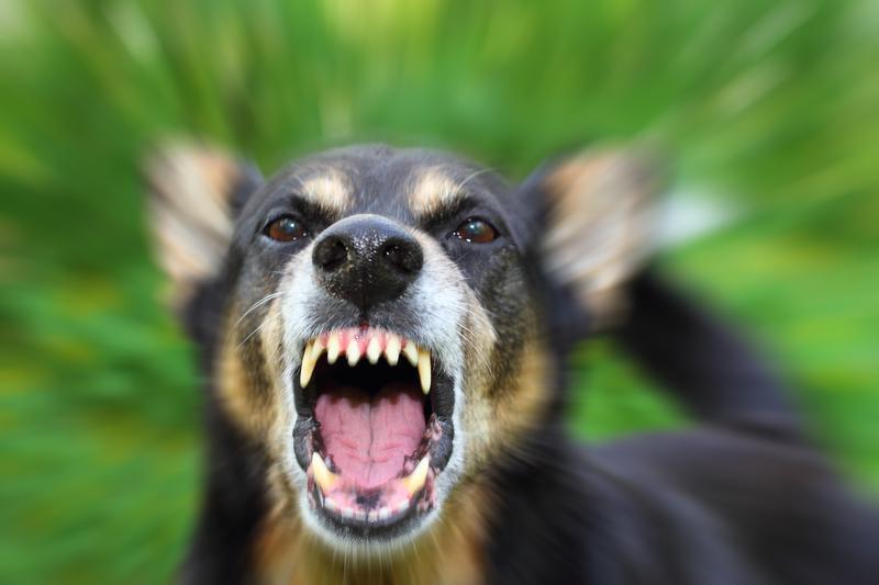 Riverside_County_Dog_Bite