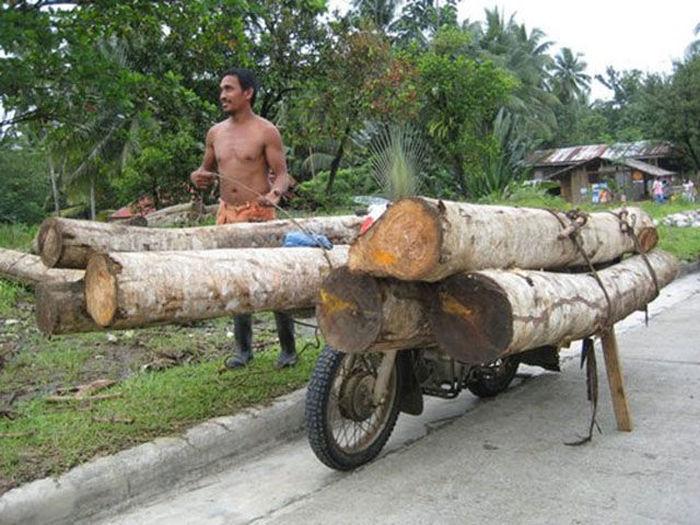 motosiklette ağaç taşımak