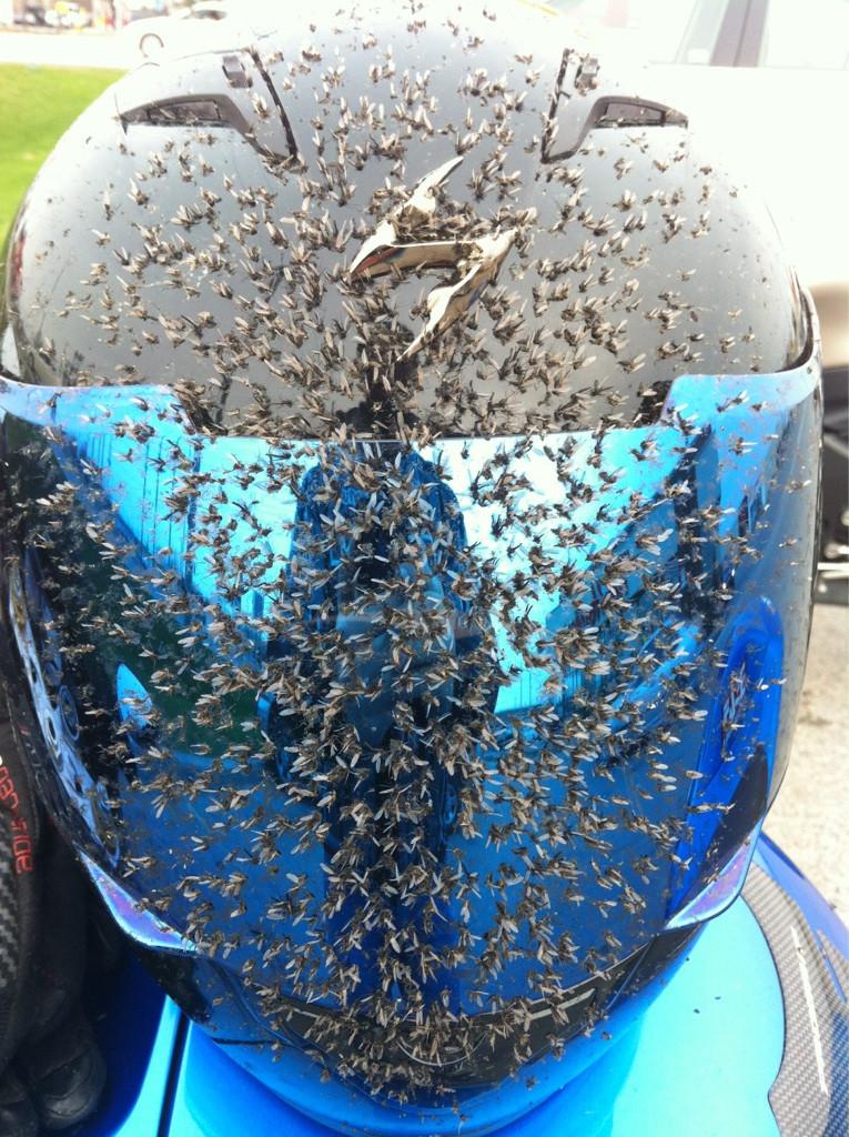 rider helmets