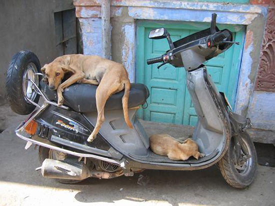 Sleeping-on-a-Motorcycle-21