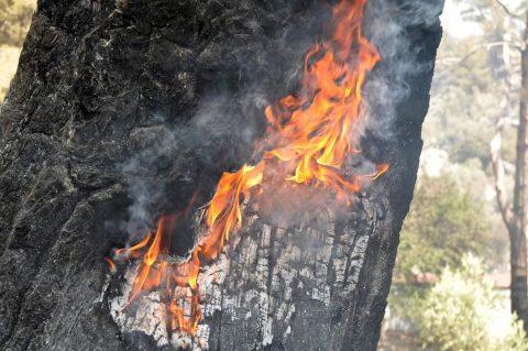 Türkiye'nin ciğerlerini yakan yangından sonra fotoğraflar