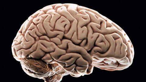 Beyin hakkında kısa bir bilgi